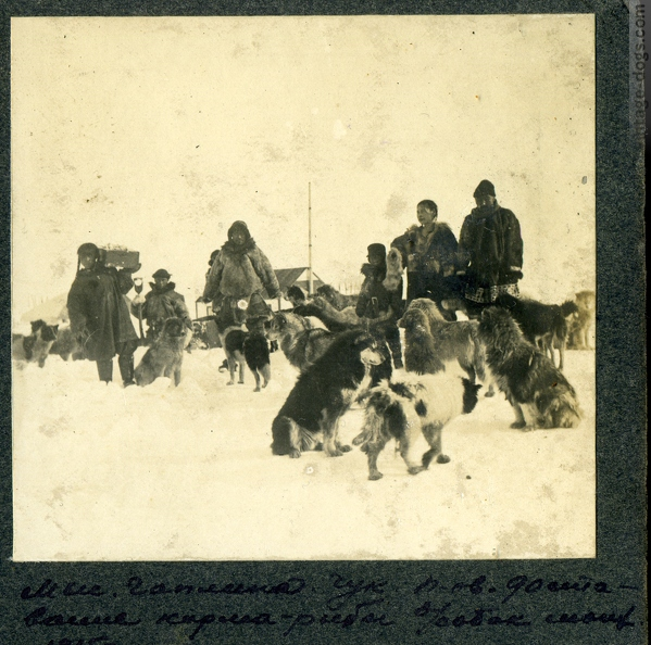 vintage-dogs.com_Nothern_Sled_Dogs_1917_190.jpg