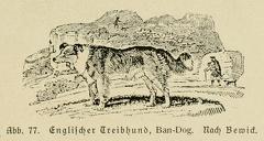 Der_deutsche_Schaferhund_in_Wort_und_Bild_-_vintage-dogs.com _0113 (2).jpg
