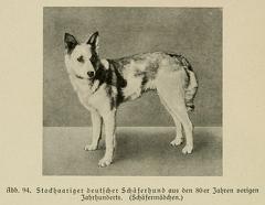 Der_deutsche_Schaferhund_in_Wort_und_Bild_-_vintage-dogs.com _0138.jpg