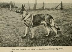 Der_deutsche_Schaferhund_in_Wort_und_Bild_-_vintage-dogs.com _0166 (2).jpg
