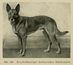 Der_deutsche_Schaferhund_in_Wort_und_Bild_-_vintage-dogs.com _0182.jpg