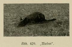 Der_deutsche_Schaferhund_in_Wort_und_Bild_-_vintage-dogs.com _0636.jpg