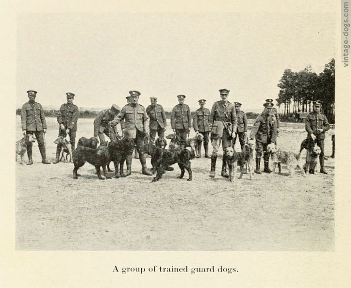 vintage-dogs.com_britishwardogs_22.jpg