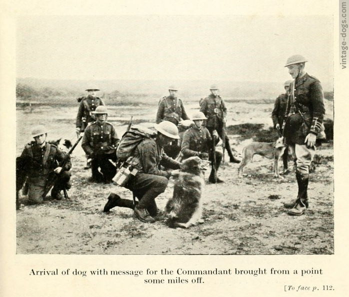 vintage-dogs.com_britishwardogs_10.jpg